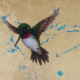 Amanda Kaay - original painting - acrylic and gold leaf - hummingbird closup